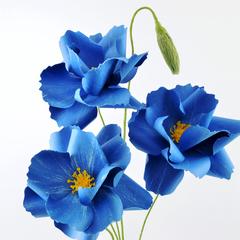 Winter Blues Paper Flowers