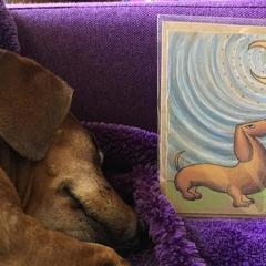 Moonlight dog