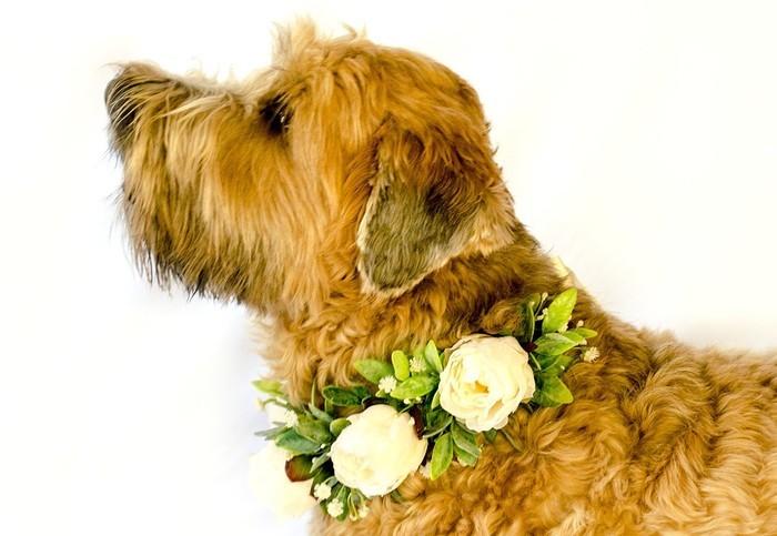 Cream Peony Floral Dog Collar