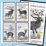 Extinct Antelopes Dictionary Printable