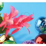 Christmas cactus Sleigh Bells Christmas card