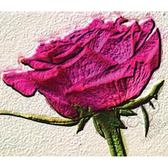 Smoking hot Pink rose greeting card