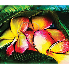 Frangipani hot pink and yellow flower greeting card. Fragrance of summer