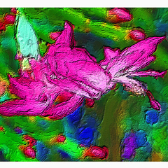 Greeting card Christmas Cactus Millie from Cloud Publishing