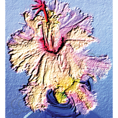 Greeting card of the famous frilly flowering Aspen Christmas Cactus