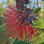 Kunzea Flower Medium Print