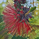 Kunzea Flower Large Print