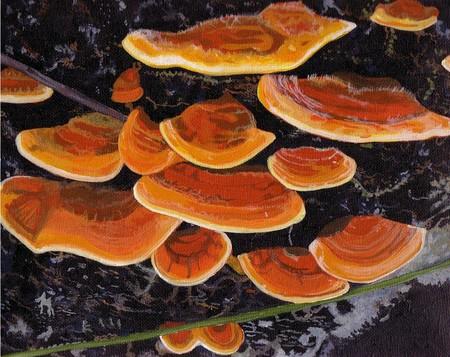 Bracket Fungi Framed Painting