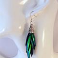 Elytra Brass Earrings - REAL Thai Jewel Beetle wings