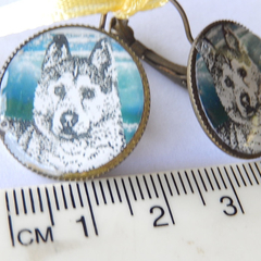 Siberian Husky Alaskan Malamute bronze toned working dog family pet lever back e