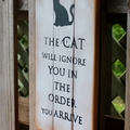 The Cat Will Ignore YouIn The Order You Arrive