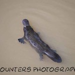 Platypus (A4)