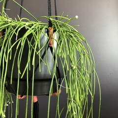 Plant hanger, macrame, cotton rope, black and terracotta