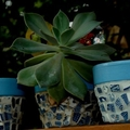 Mosaic Flower Pots - 2 Planter Pots - Tiny pots - Blue willow
