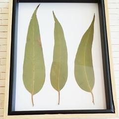 Botanical Art || Framed Australian native flora, Aussie bush art, garden gifts