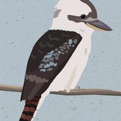 Kookaburra A4