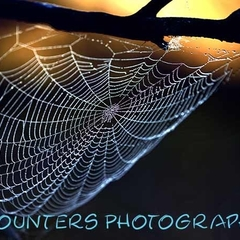 Early Morning Dewy Spider Web (A2)