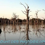 Natural Bird Sanctuary, Forbes, NSW (A2)