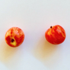 Apple studs : Red gala apples - Apple stud earrings - Teachers Gift