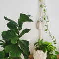 Macramé Plant Hanger, Tassels, Wall Hanger