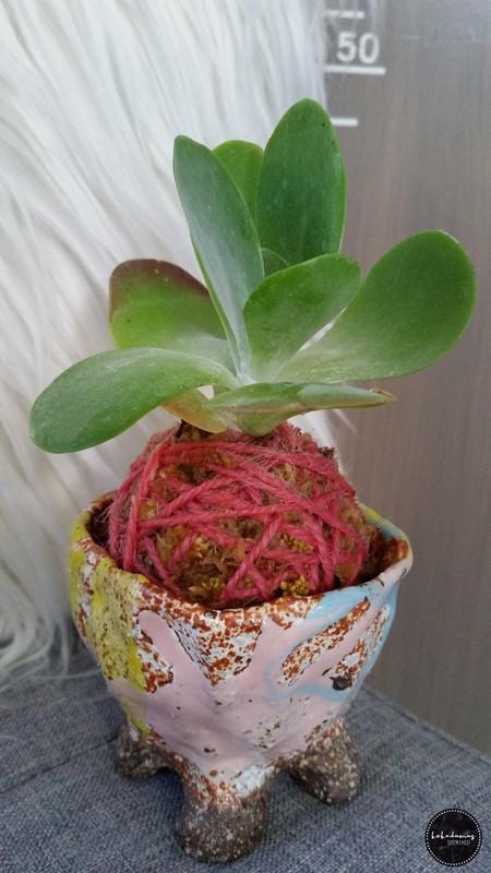 Easter Kokedama in Pot - Flap Jack (Pot 1)