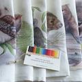 Superb Fairy-wren Tea Towel, Australian wildlife illustration, blue wren