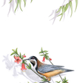 Eastern Spinebill Tea Towel, Australian wildlife illustration bird linen fabric