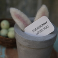 24 Somebunny Loves You Valentine's Day Tags Easter Tags Ivory or Kraft Tags