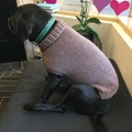 Hand knitted dog sweater pattern - small size.
