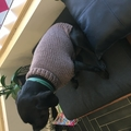 Hand knitted dog sweater pattern - large size.