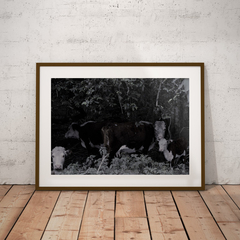 Shelter - Cow family photo print.