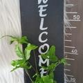 Kokedama Welcome Sign - Font 4