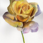 Yellow Rose, Original Watercolour Floral painting,  Flower, Gift Idea,