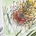 Australian Natives Blank Greeting Card -  Grevillea - Peach Blush
