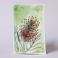 Australian Natives Blank Greeting Card -  Grevillea - Peach Blush