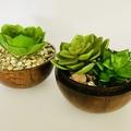 Succulent pods