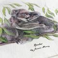 Koalas Tea Towel, Australian wildlife illustration, native animals