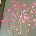 Pink botanical art || Pressed flowers, gifts, pink flowers, floral