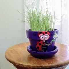 Grass Head: Lulu Ladybird