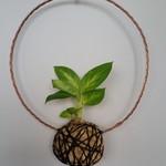 Copper Wreath Kokedama - Dieffenbachia