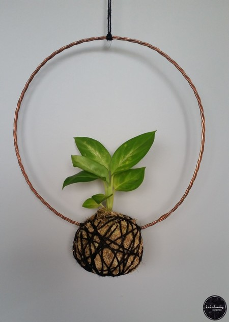 Copper Wreath Kokedama - Dieffenbachia