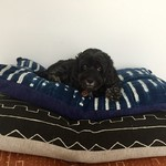 Medium dog bed/large floor cushion cover in vintage African indigo  fabric