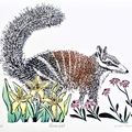 Numbat Lino Cut Print / Original Artwork