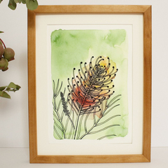 Grevillea: Peach Blush Fine Art Print - A4 - Australian Native - Unframed