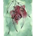 Gum Nuts Fine Art Print - A4 - Australian Native - Unframed