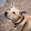 Personalised Leather Dog Lead Full Grain