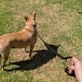 Adjustable Personalised Leather Dog Lead Full Grain