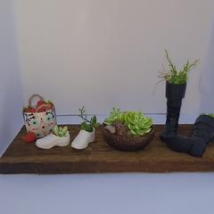 miniature home decor the shoe garden