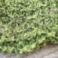 knitted ruffled scarf or collar made from mohair blend yarn in greens