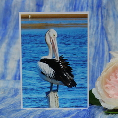 Preening Pelican Photo on a Blank Card